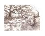Minotaure à l'arbre